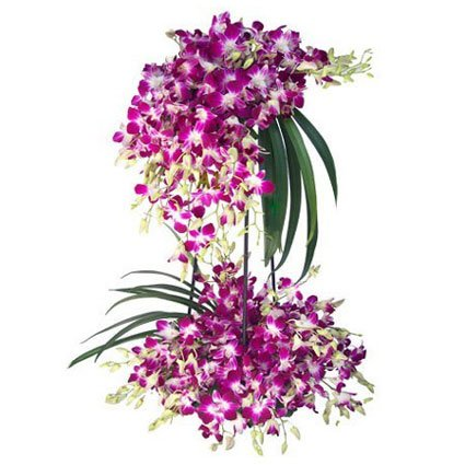 Amazing Orchids Arrangement
